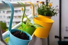 Pots de fleurs sur balcons : règles, lois et conseils