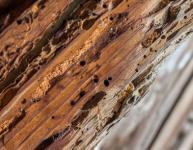 Les solutions contre les termites en immeuble