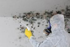 Mérules et champignons : explication et protection
